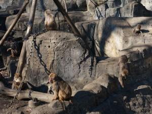 こども動物園サル