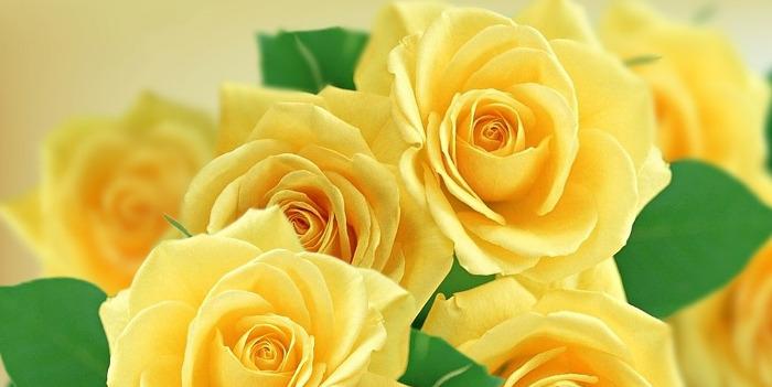 父の日花束