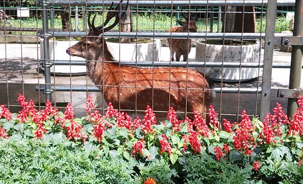 羽村動物公園